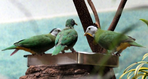 Зеленые птицы с желтым