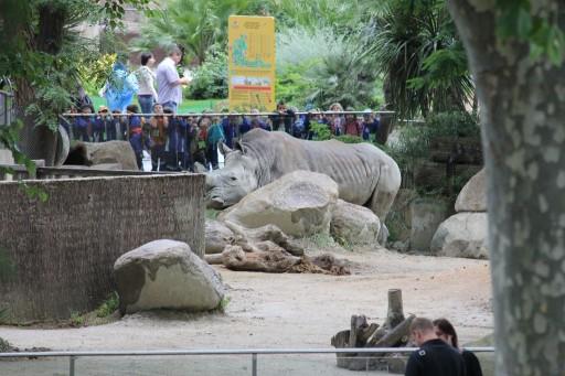Бегемот в зоопарке Барселоны